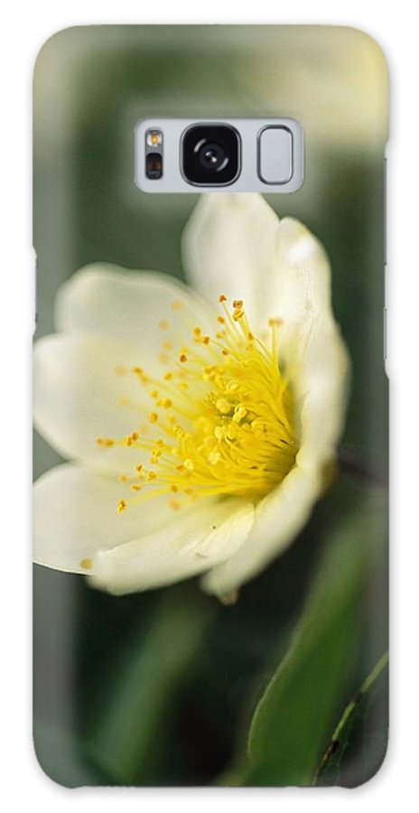 North America Galaxy S8 Case featuring the photograph A Close View Of A Wildflower In Yoho by Michael Melford