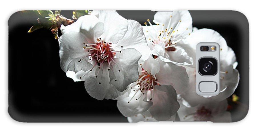 Apricot Galaxy S8 Case featuring the photograph Apricot Flowers At Night by Masha Batkova