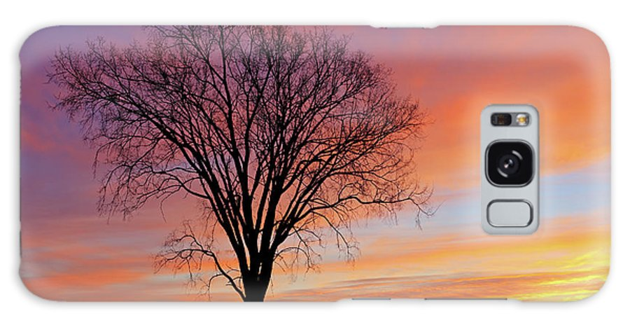Bare Galaxy S8 Case featuring the photograph Bare Trees At Dawn by Dean Pennala