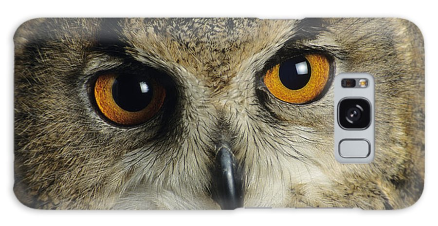 Northern Eagle Owl Galaxy S8 Case featuring the photograph European Eagle Owl by David Aubrey