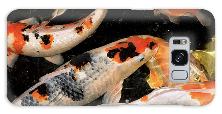 Cyprinus Carpio Galaxy S8 Case featuring the photograph Koi Carp by Victor Habbick Visions