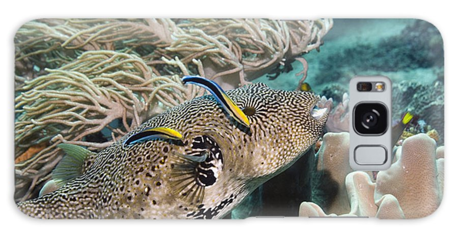Cleaner Wrasse Galaxy S8 Case featuring the photograph Map Pufferfish by Georgette Douwma