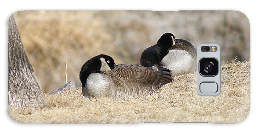 Goose Galaxy S8 Case featuring the photograph Nap Time by Lori Tordsen