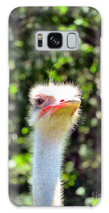 Ostrich Galaxy S8 Case featuring the photograph Nosey by Art Dingo