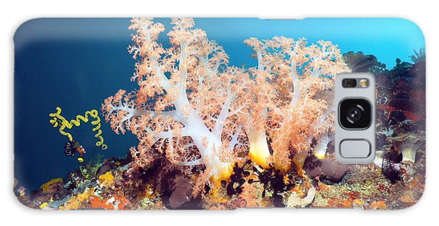 Scleronephthya Sp. Galaxy S8 Case featuring the photograph Soft Coral On A Reef by Georgette Douwma