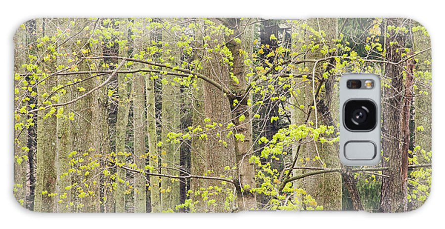 Spring Galaxy S8 Case featuring the photograph Spring Forest by Dean Pennala