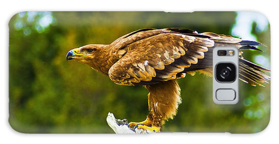 Birds Of Prey Galaxy S8 Case featuring the photograph Steppe Eagle by Bill Barber