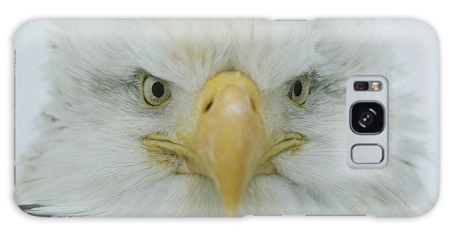 Animals Galaxy S8 Case featuring the photograph A Portrait Of An American Bald Eagle by Klaus Nigge