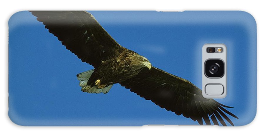 Asia Galaxy S8 Case featuring the photograph An Endangered White-tailed Sea Eagle by Tim Laman