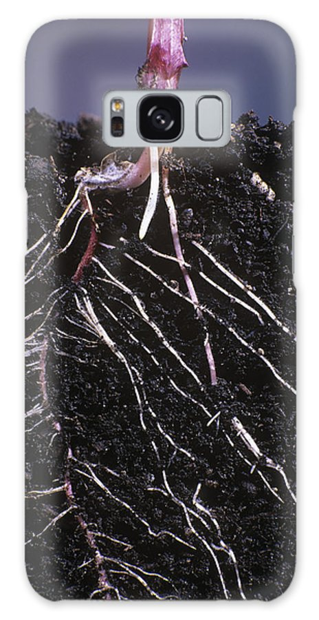 Plant Galaxy S8 Case featuring the photograph Plant Roots by David Nunuk