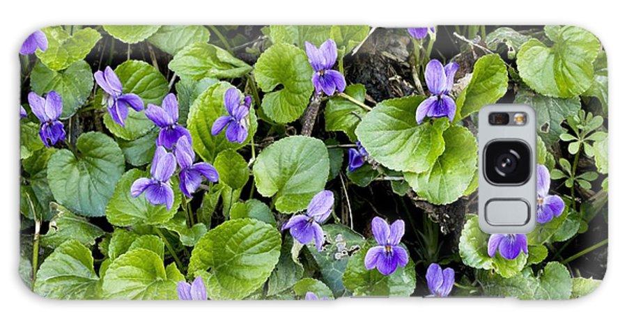 Viola Odorata Galaxy S8 Case featuring the photograph Viola Odorata (sweet Violets) by Bob Gibbons