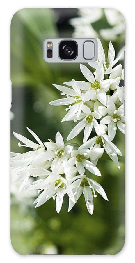 Allium Ursinum Galaxy S8 Case featuring the photograph Wild Garlic (allium Ursinum) by Adrian Bicker