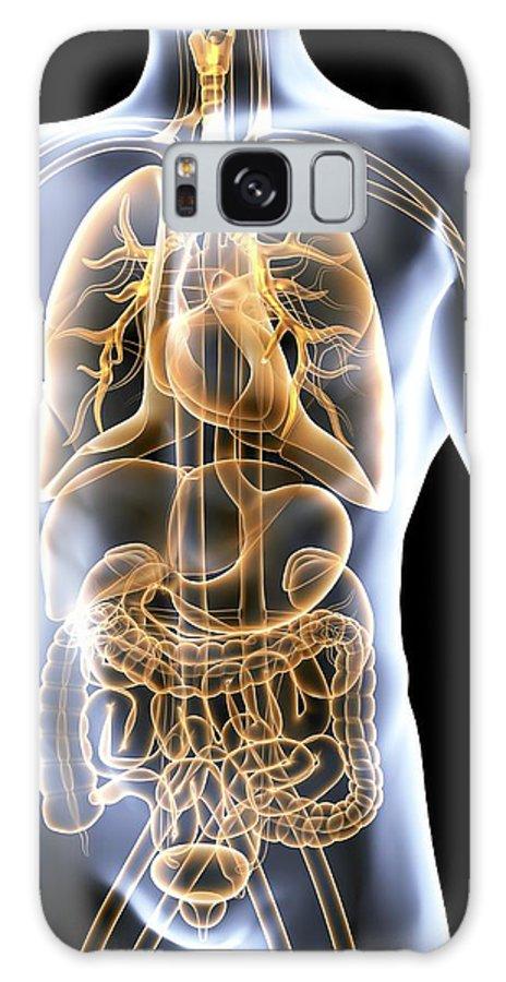 Human Anatomy Galaxy S8 Case featuring the photograph Human Anatomy, Artwork by Pasieka