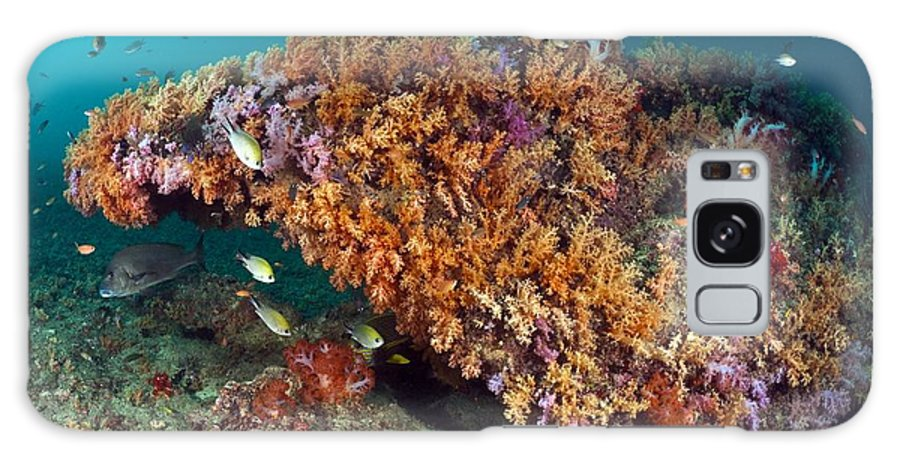 Animal Galaxy S8 Case featuring the photograph Tropical Reef, Indonesia by Matthew Oldfield