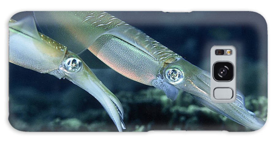 Squid Galaxy S8 Case featuring the photograph Bigfin Reef Squid by Georgette Douwma