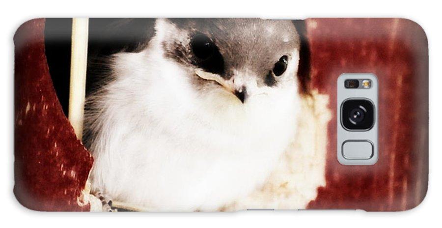 Bird Galaxy S8 Case featuring the digital art Red Barn Birdie by Kathy Sampson