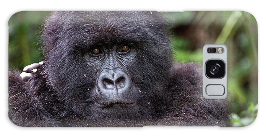 Mountain Gorilla Galaxy S8 Case featuring the photograph Mountain Gorilla by Tony Camacho