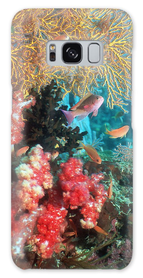 Pseudanthais Squamipinnis Galaxy S8 Case featuring the photograph Coral Reef by Georgette Douwma