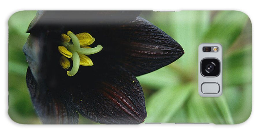 Commonwealth Of Independent States Galaxy S8 Case featuring the photograph A Beautiful Fritillaria Camschatcensis by Klaus Nigge