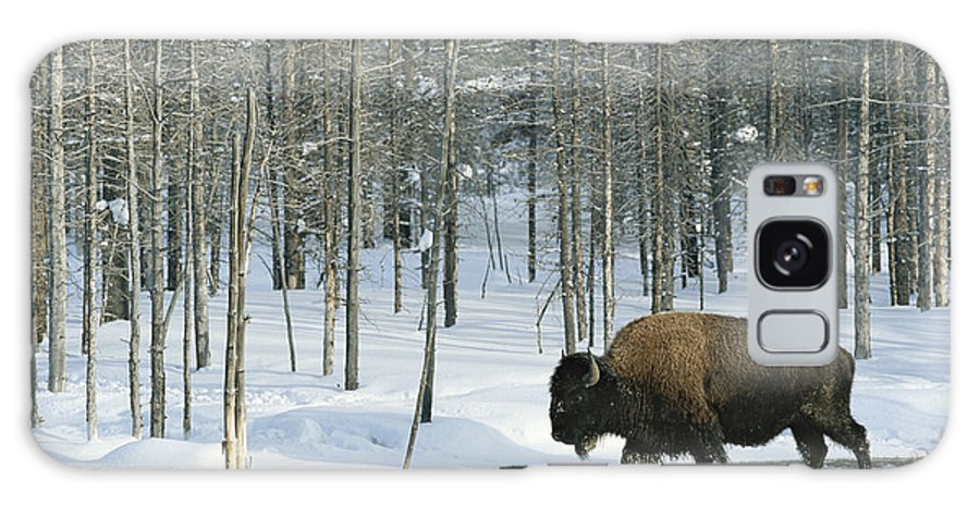 Animals Galaxy S8 Case featuring the photograph A Bison Stands In A Cold Stream by Norbert Rosing