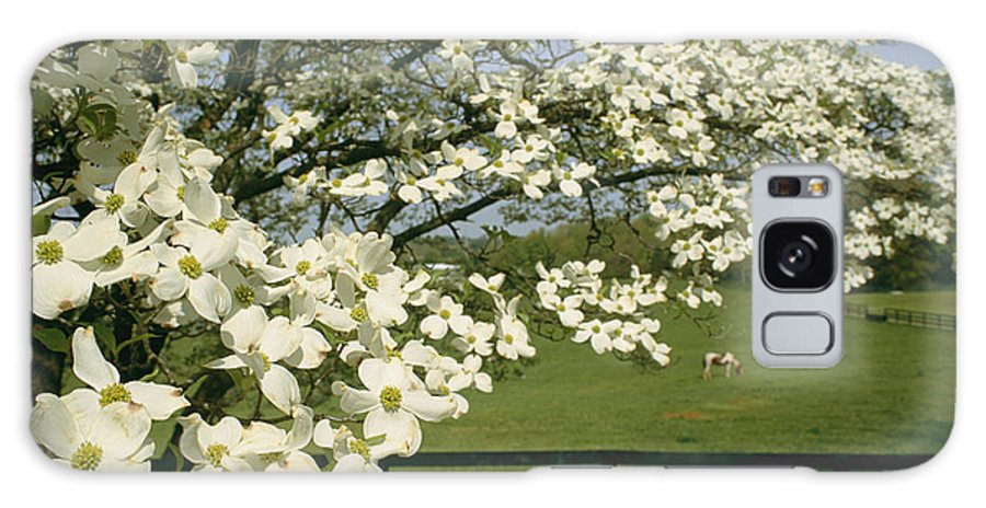 Plants Galaxy S8 Case featuring the photograph A Blossoming Dogwood Tree In Virginia by Annie Griffiths