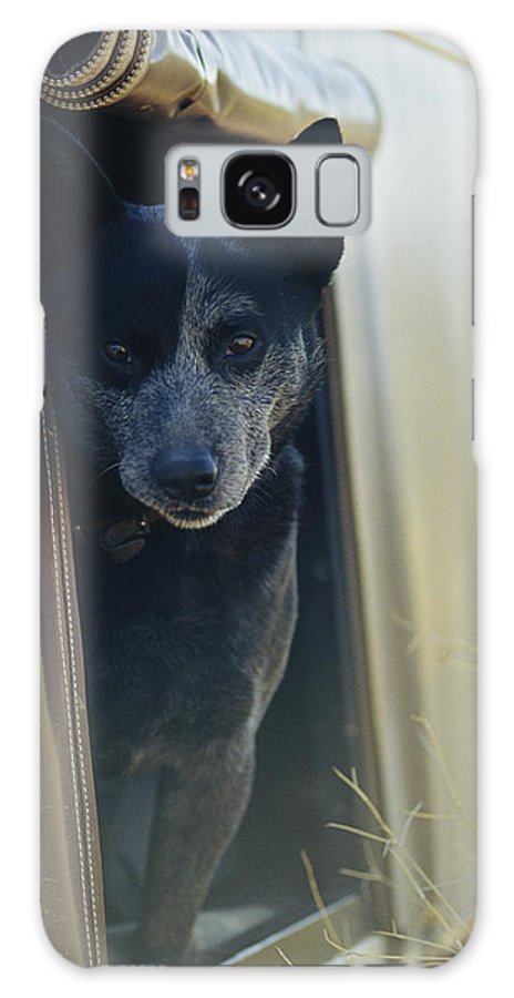 Animals Galaxy S8 Case featuring the photograph A Blue Heeler Cattle Dog Peers by Jason Edwards