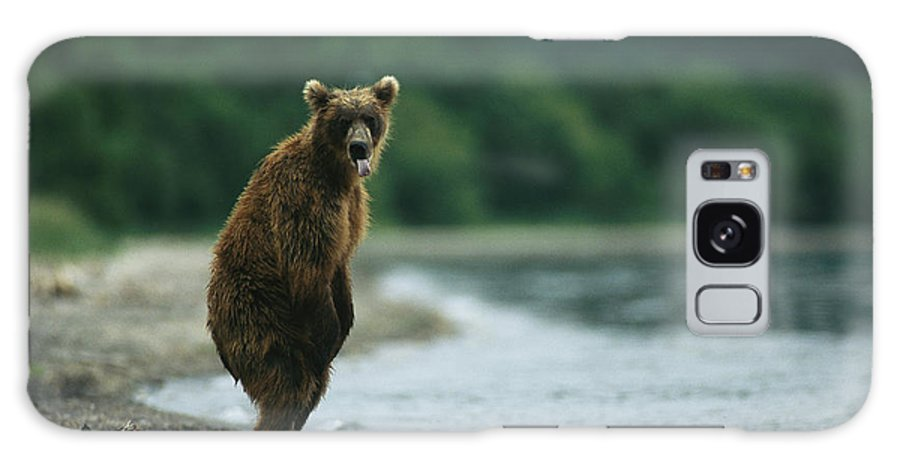 Commonwealth Of Independent States Galaxy S8 Case featuring the photograph A Brown Bear Standing At Waters Edge by Klaus Nigge