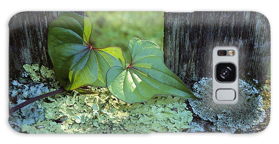 North America Galaxy S8 Case featuring the photograph A Cinnamon Vine And Foliose Lichen by George F. Mobley