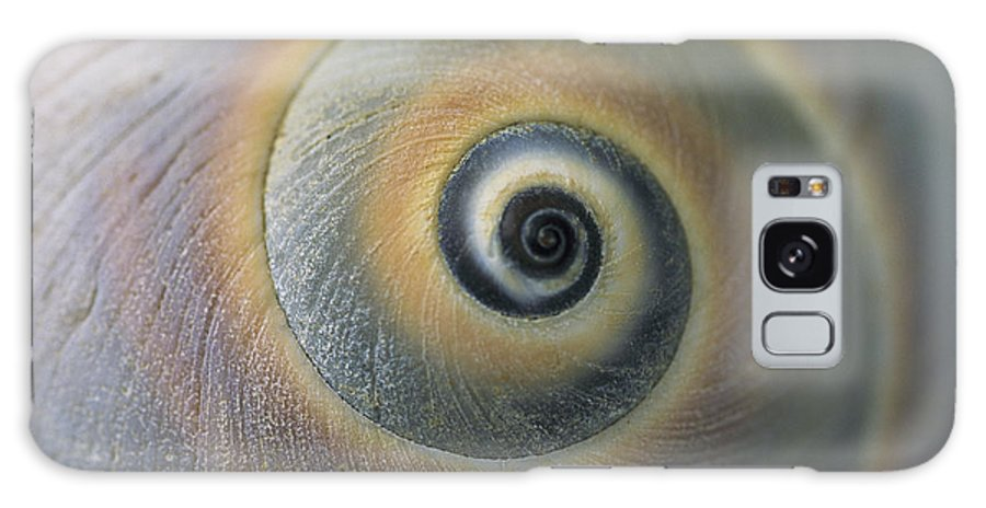 North America Galaxy S8 Case featuring the photograph A Close View Of A Moon Snail Shell by Darlyne A. Murawski