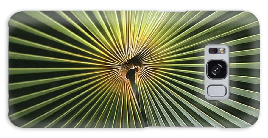 Plants Galaxy S8 Case featuring the photograph A Close View Of A Palm Frond by Ed George