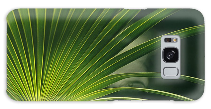 Plants Galaxy S8 Case featuring the photograph A Close View Of A Palm Frond by Klaus Nigge