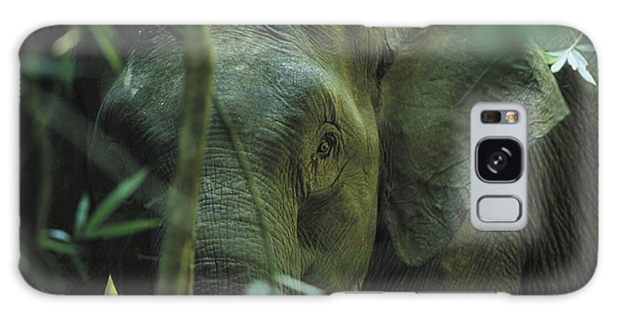 Asia Galaxy S8 Case featuring the photograph A Close View Of An Asian Elephant by Tim Laman