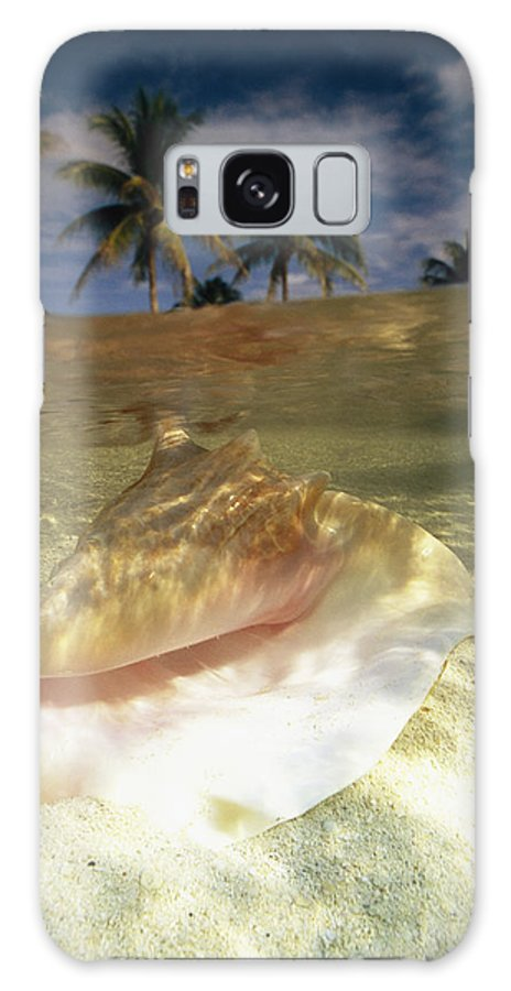 North America Galaxy S8 Case featuring the photograph A Conch Shell Rests Beneath The Clear by Michael Melford