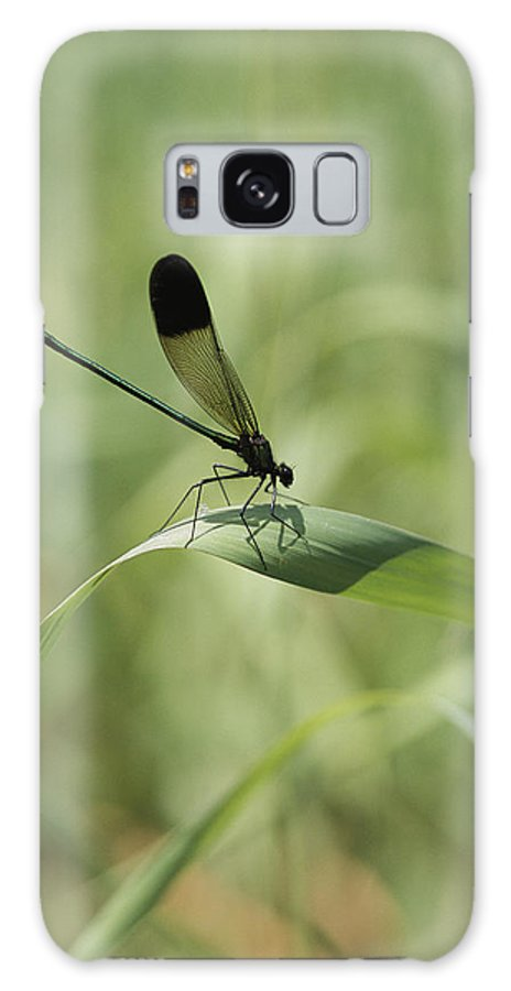 United States Of America Galaxy S8 Case featuring the photograph A Graceful Dragonfly Sitting On A Blade by Heather Perry