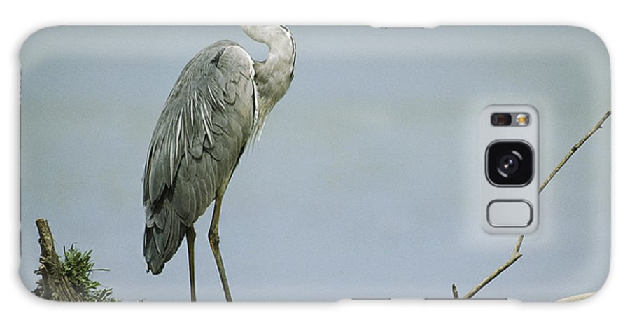 Animals Galaxy S8 Case featuring the photograph A Graceful Gray Heron Standing On A Log by Klaus Nigge