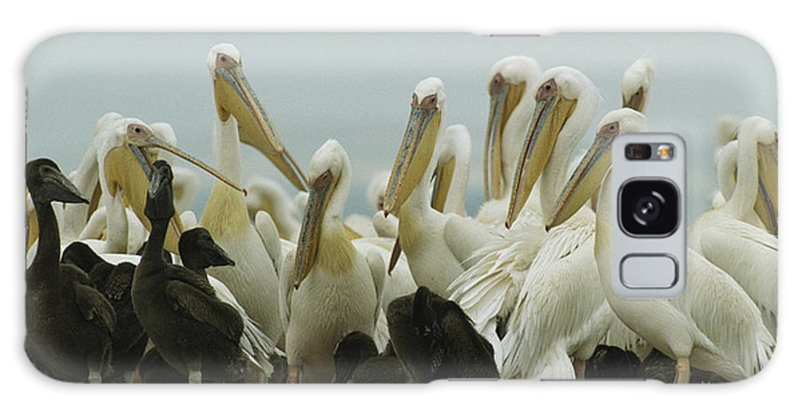 Pelecanus Onocrotalus Galaxy S8 Case featuring the photograph A Group Of Eastern White Pelicans by Klaus Nigge