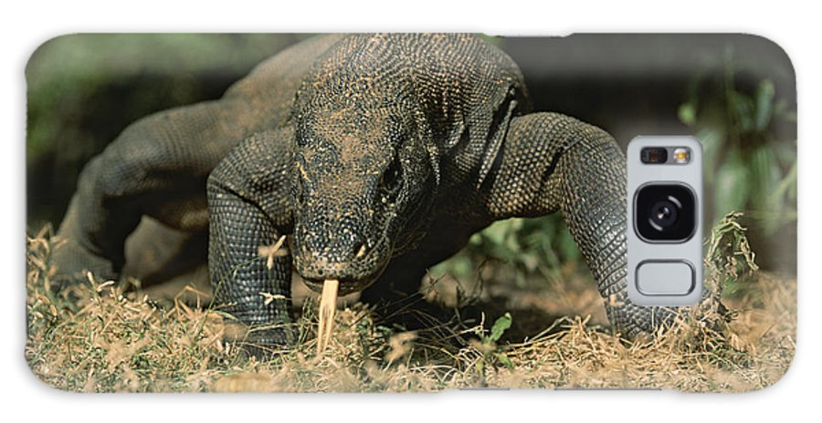 Asia Galaxy S8 Case featuring the photograph A Komodo Dragon Sensing The Air by Tim Laman