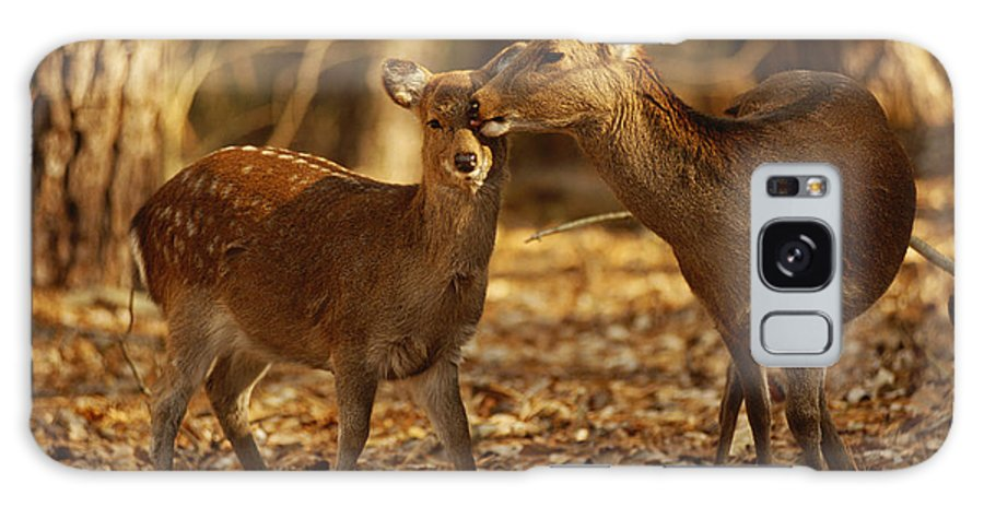 North America Galaxy S8 Case featuring the photograph A Mother And Fawn Sika Deer by Raymond Gehman