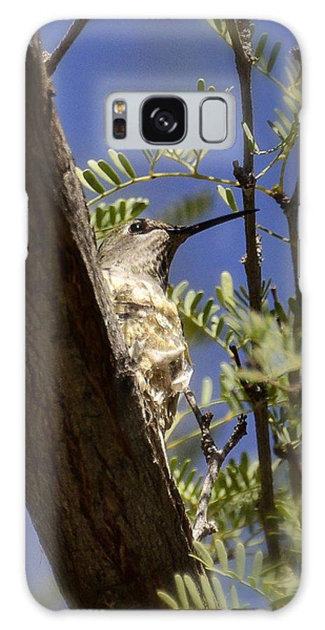Hummingbird Galaxy S8 Case featuring the photograph A Nesting Hummingbird by Saija Lehtonen
