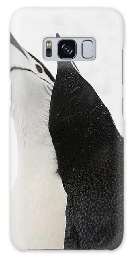 Antarctica Galaxy S8 Case featuring the photograph A Pair Of Chinstrap Penguins by Ralph Lee Hopkins