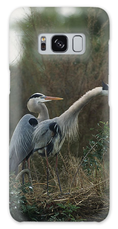 Ardea Herodias Galaxy S8 Case featuring the photograph A Pair Of Great Blue Herons Stand by Klaus Nigge