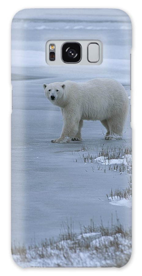 Animals Galaxy S8 Case featuring the photograph A Polar Bear Stepping Onto Ice by Tom Murphy