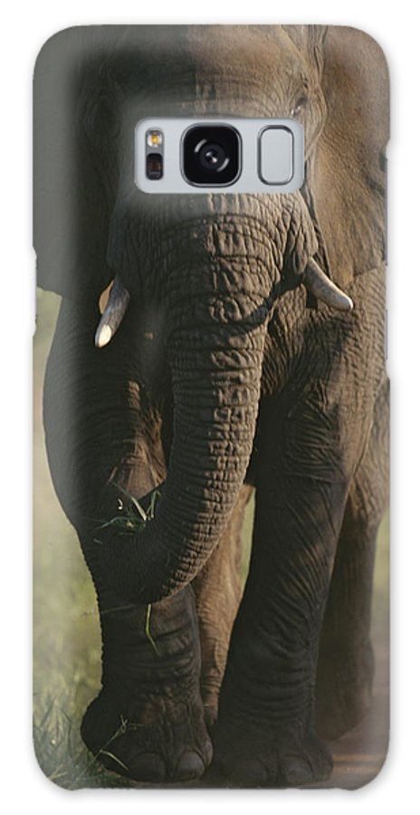 Africa Galaxy S8 Case featuring the photograph A Portrait Of An African Elephant by Tim Laman