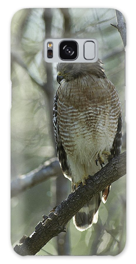 Animals Galaxy S8 Case featuring the photograph A Red Shouldered Hawk Perches In A Tree by Klaus Nigge