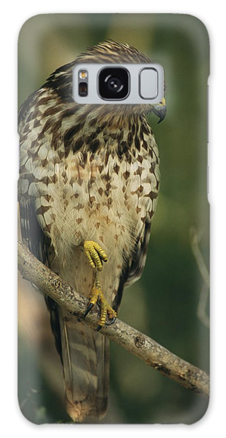 Animals Galaxy S8 Case featuring the photograph A Red Shouldered Hawk Perches On A Tree by Klaus Nigge