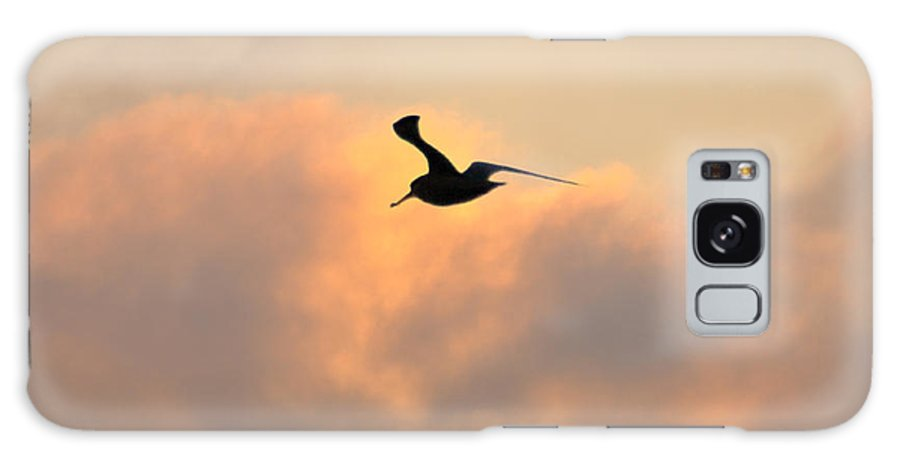 Seagull Galaxy S8 Case featuring the photograph A Seagull Takes Flight by Bill Cannon
