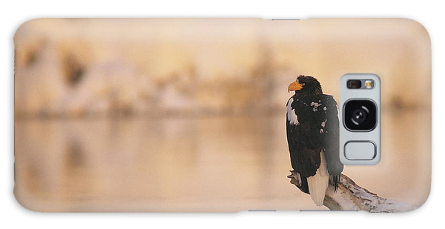 Commonwealth Of Independent States Galaxy S8 Case featuring the photograph A Stellers Sea Eagle Perched On A Log by Klaus Nigge