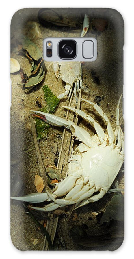 Blue Crab Galaxy S8 Case featuring the photograph A Time To Shed by Rebecca Sherman