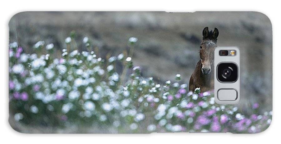 Animals Galaxy S8 Case featuring the photograph A Wild Horse On A Wildflower Covered by Tim Laman