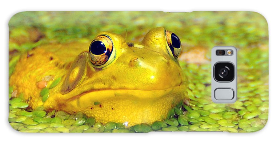 Yellow Bullfrog Galaxy S8 Case featuring the photograph A Yellow Bullfrog by Paul Ward